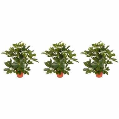 3x schefflera kunstplant 55 cm prijs