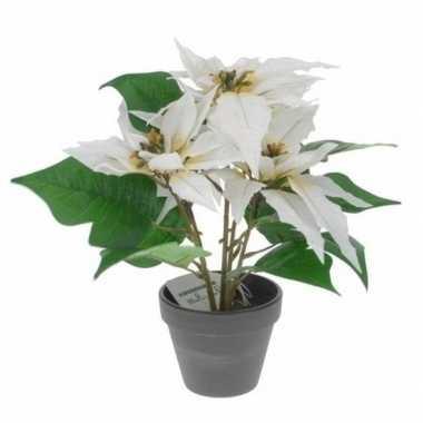 Kunstplanten witte poinsettia bloem met pot 30 cm prijs