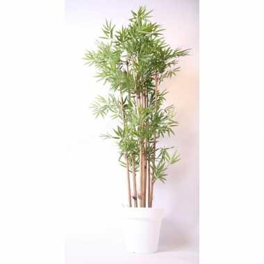 Tropische bamboe boom in witte pot 190 cm prijs