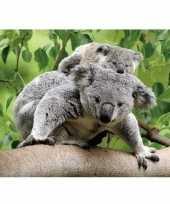 Vergelijk 3d magneetje koalaberen prijs