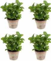 Vergelijk 4x groene kunstplant basilicum kruiden plant in pot prijs