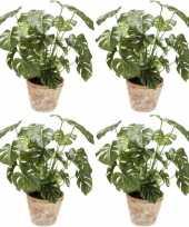 Vergelijk 4x monstera planten in terra cotta pot 50 cm prijs