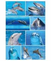 Vergelijk 9x dolfijn stickervellen met 8 stickers prijs