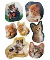 Vergelijk 9x poezen katten stickervellen met 7 stickers prijs